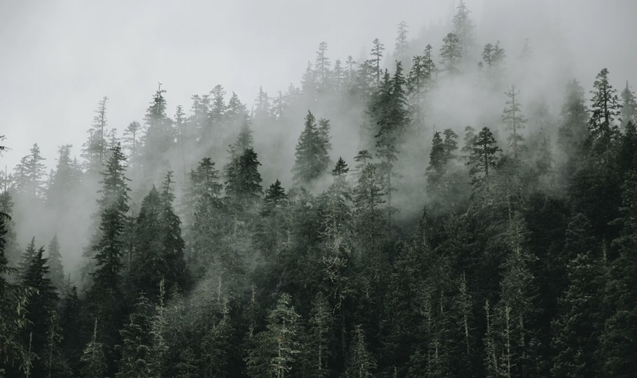 Misty forest wallpapers