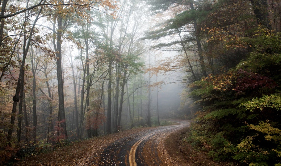 Foggy forest road in autumn wallpapers